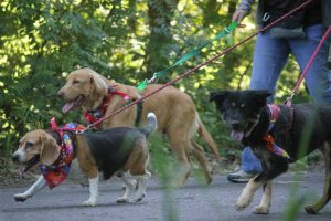 WWW 2015 dogs on a walk