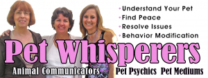 Pet whsiperers banner